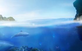 Картинка Ecco The Dolphin, медузы, games, вода, море, рыбы, игры