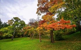 Картинка осень, трава, листья, деревья, парк, тропинка