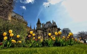 Картинка замок, тюльпаны, небо, облака, башня, цветы