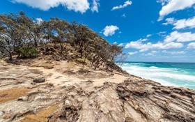 Обои деревья, океан, побережье, Австралия, Australia, Queensland, North Stradbroke Island