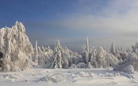 Обои зима, лес, снег, ель, сугробы, хвойные, заснеженный