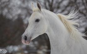 Обои лошадь, конь, морда, профиль, грива