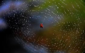 Обои паутина, паук, Webs