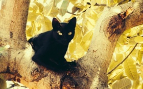 Обои cat, tree, leaves, eyes