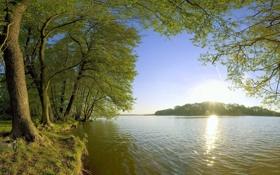 Обои вода, деревья, пейзаж, Солнце, сумка, мутная