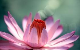 Обои красиво, настроение, цветы