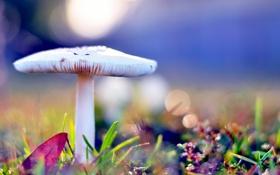 Обои осень, трава, макро, блики, гриб, ярко, боке