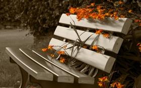 Обои park, flowers, bench, sepia