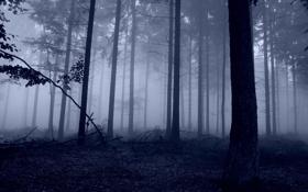Обои природа, лес, туман