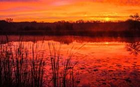 Картинка небо, трава, солнце, облака, закат, озеро, пруд
