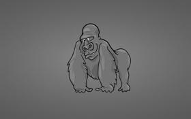 Обои gorilla, горилла, обезьяна, monkey, темный фон