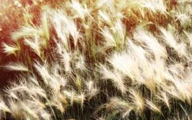 Картинка солнце, цветы, Природа, пух