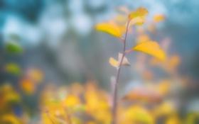 Обои размытость, жёлтые, веточка. листья