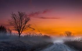 Картинка дорога, пейзаж, закат, туман