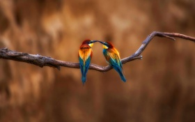 Картинка птицы, краски, ветка, перья, клюв