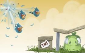Картинка свинья, Джейк, Game, Angry Birds, Джей, TNT, Джим