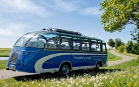Картинка дорога, небо, трава, цветы, синий, дерево, автобус