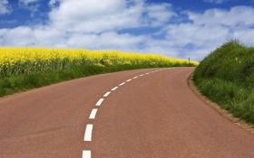 Картинка дорога, небо, трава, листья, облака, пейзаж, цветы