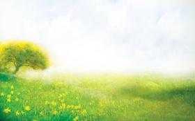 Обои поляна, трава, лето, природа, дерево, цветы