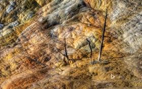 Обои деревья, горы, скалы, цвет, Вайоминг, США, Йеллоустонский национальный парк
