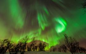Картинка зима, небо, звезды, снег, ночь, сияния, кусты