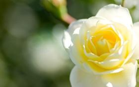 Картинка цветы, природа, красота