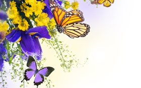 Обои вода, бабочки, цветы, ирисы, хризантемы