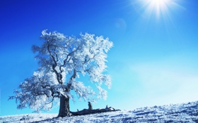 Обои зима, солнце, снег, деревья, природа, дерево, пейзажи