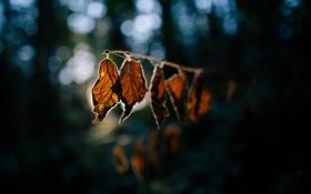 Обои листья, блики, ветка, осенние