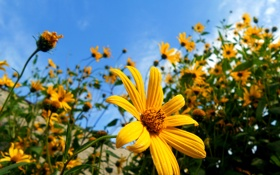 Картинка цветок, flowers, небо, макро, цветы