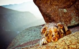 Обои фон, горы, собака