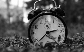 Обои макро, фото, часы, будильник
