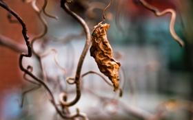 Картинка сухой лист, leaf, засохший лист, лист, макро