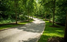 Обои дорога, зелень, трава, деревья, парк, США, аллея
