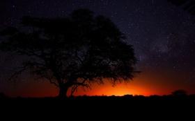 Картинка дерево, пустыня, саванна, Африка, Намибия