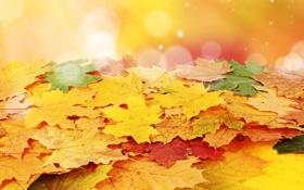 Обои листья, осень, прожилки
