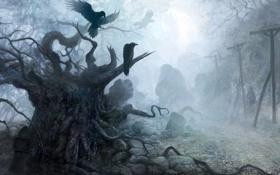 Картинка лес, деревья, туман, вороны, мрачный