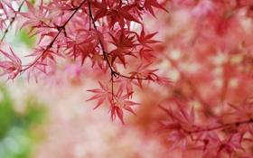 Картинка осень, листья, деревья, ветки, осенний окрас