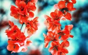 Обои ветка, весна, лепестки, сад, соцветие