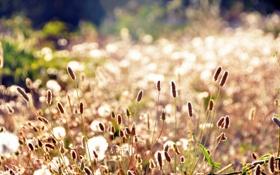 Картинка поле, лето, трава, солнце, макро, свет, поляна