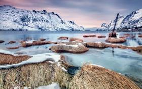 Картинка пейзаж, трава, вода, озеро, берег, природа, зима