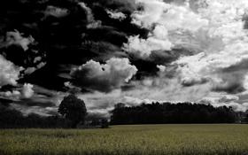 Обои поляна, облачность, мрачно, лес