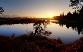 Картинка закат, осень, гладь, озеро, дерево
