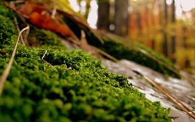 Обои лес, камни, осень, трава