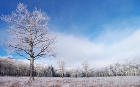 Обои зима, иней, лес, трава, дерево