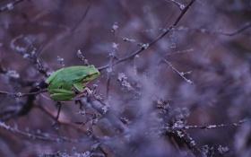 Обои природа, фон, лягушка