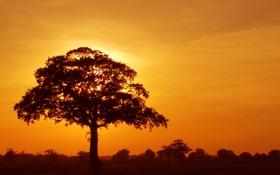 Обои закат, крона, дерево
