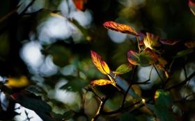 Обои осень, листья, цвета, макро, размытие, ветка