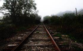 Картинка трава, деревья, туман, рельсы, железная дорога, шпалы, насыпь