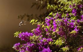 Обои природа, фон, птица, куст